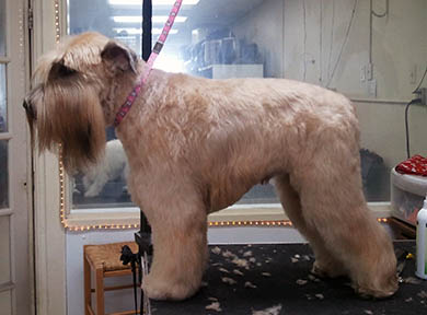Dog Grooming Photo 01