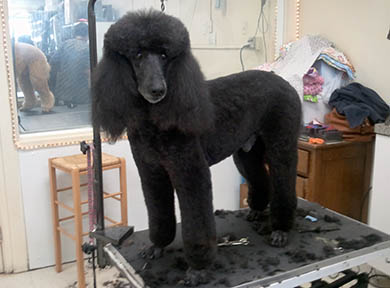 Dog Grooming Photo 02