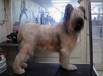 Dog Grooming Photo 04