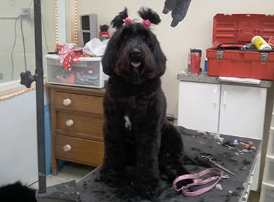 Dog Grooming Photo 05