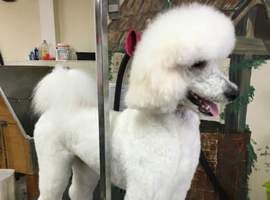 Dog Grooming Photo 03